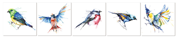 Colored birds Taulusarja