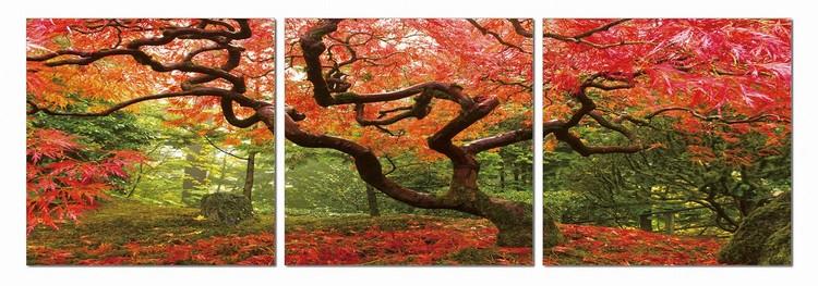Colorful Park Taulusarja