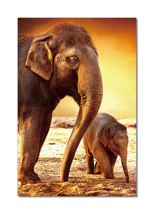 Elephants - Mom and Baby Taulusarja