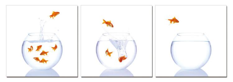 Goldfish in an aquarium Taulusarja