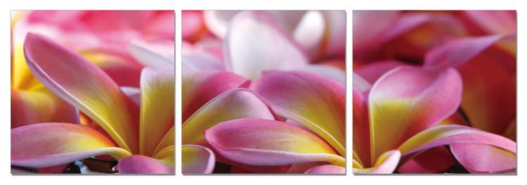 Pink Blossoms Taulusarja
