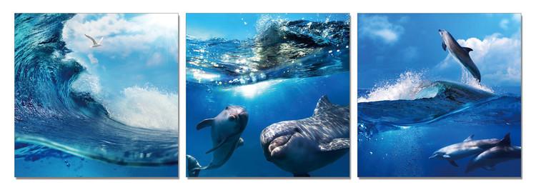 World of Dolphins Taulusarja