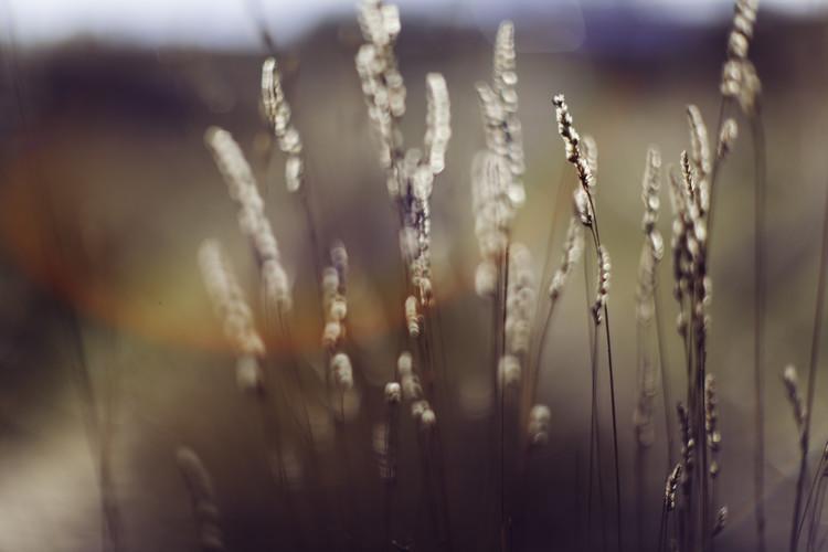 Tela Dry plants