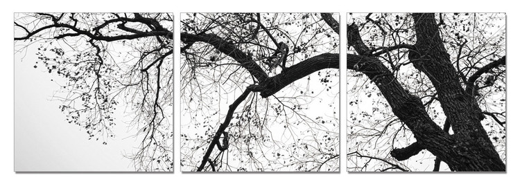 Treetop (B&W) Tableau Multi-Toiles