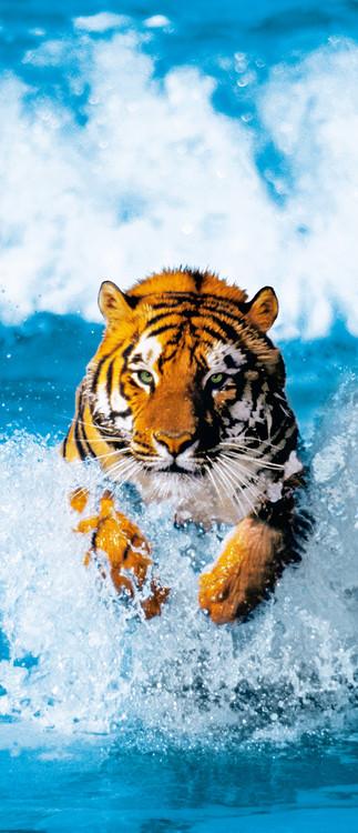 Valokuvatapetti BENGAL TIGER