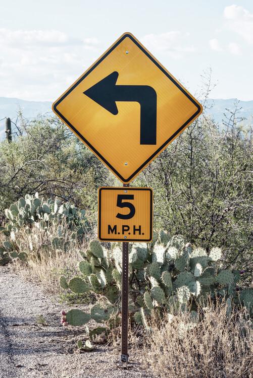 Valokuvatapetti Cacti Cactus Collection - 5 MPH
