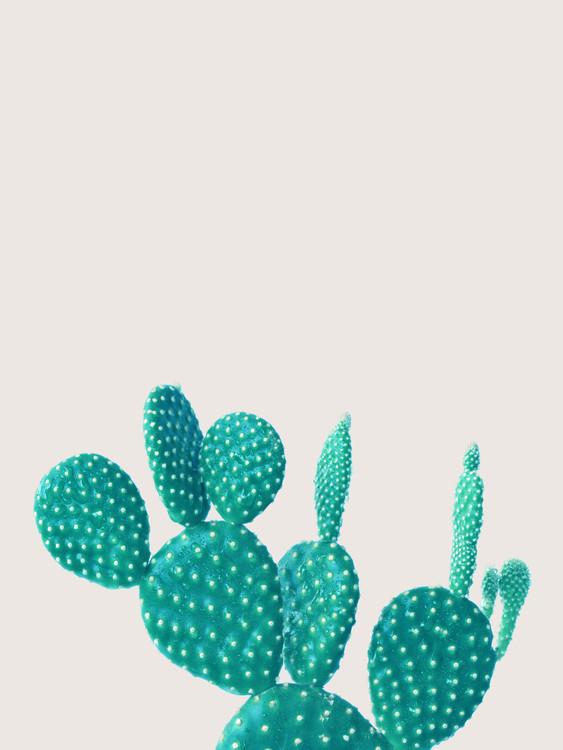Valokuvatapetti cactus 5