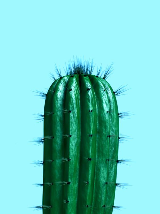 Valokuvatapetti cactus1