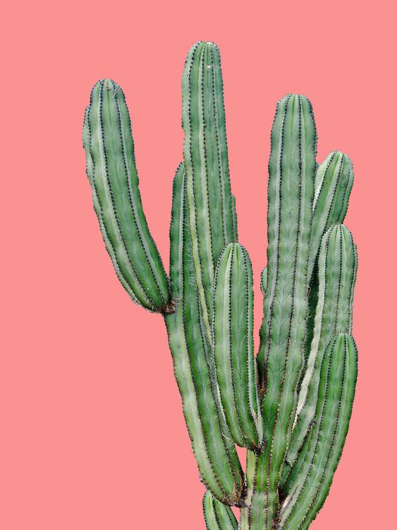 Valokuvatapetti cactus6