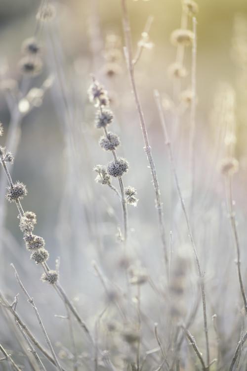 Valokuvatapetti Dry plants at winter