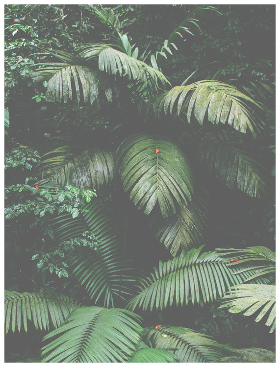Valokuvatapetti green leaves large