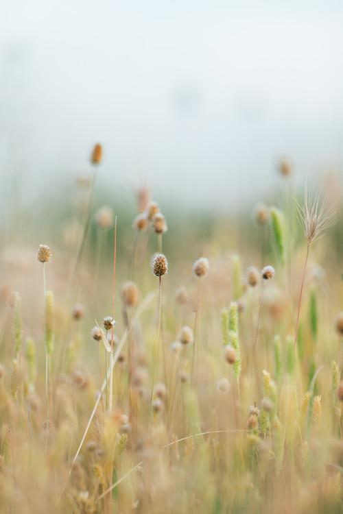 Valokuvatapetti Pastel colour plants