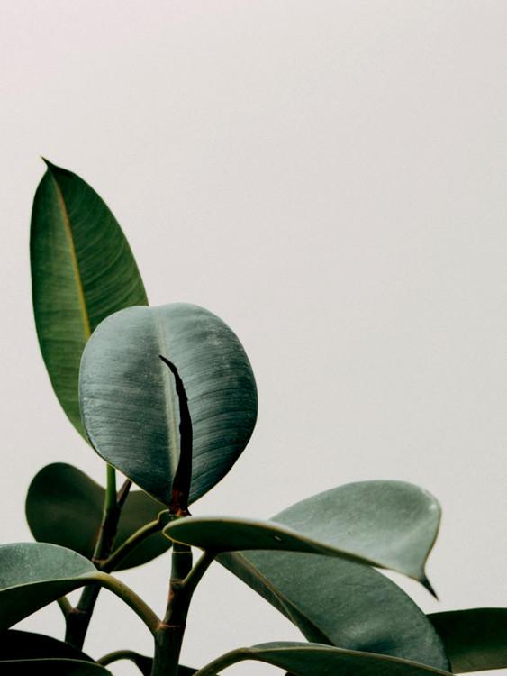 Valokuvatapetti plant leaf