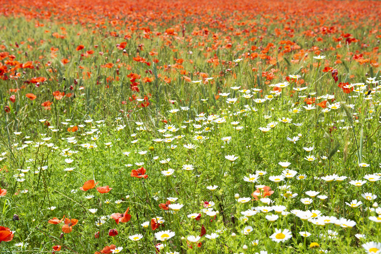 Valokuvatapetti Spring Flowers