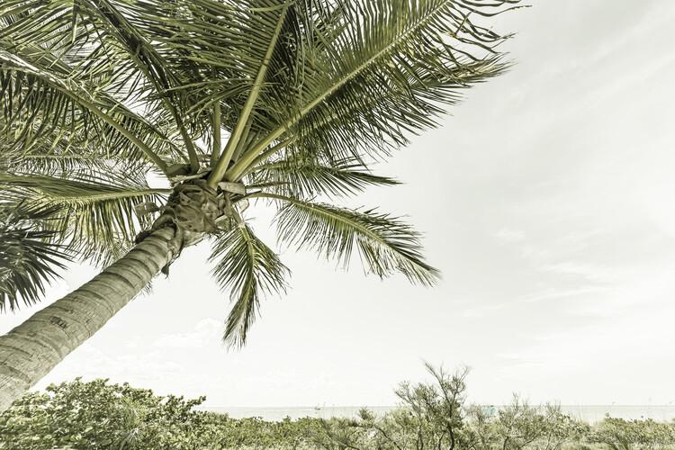 Valokuvatapetti Summertime in Florida   Vintage