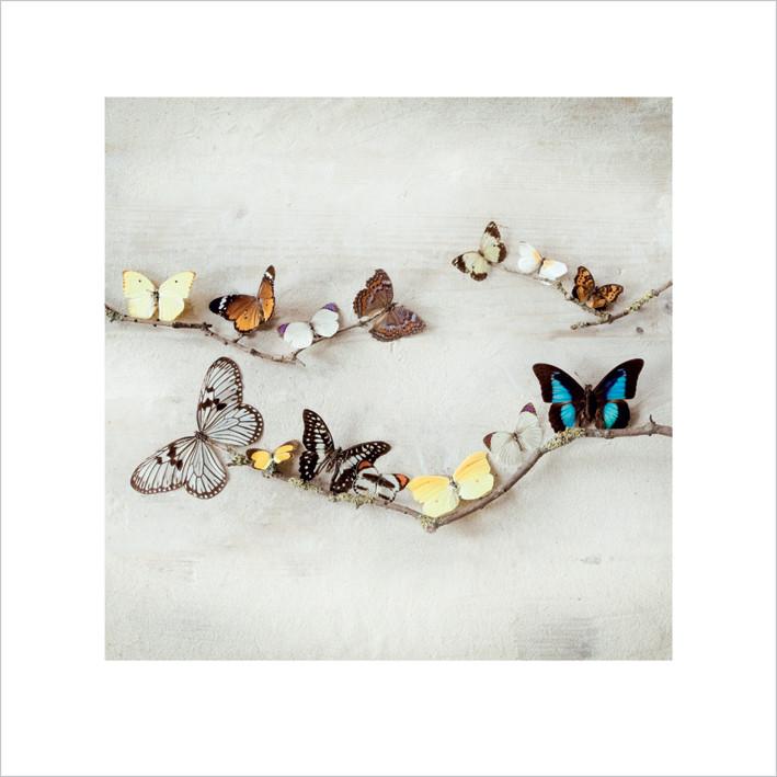 Ian Winstanley - Array of Butterflies Art Print