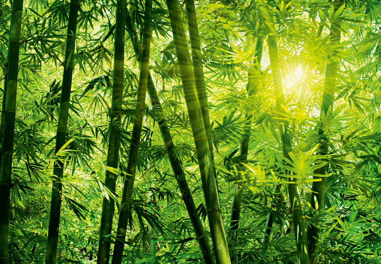 BAMBOO FOREST Poster Mural