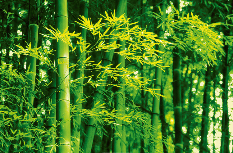DAVE BRÜLLMANN - bamboo in spring Poster Mural