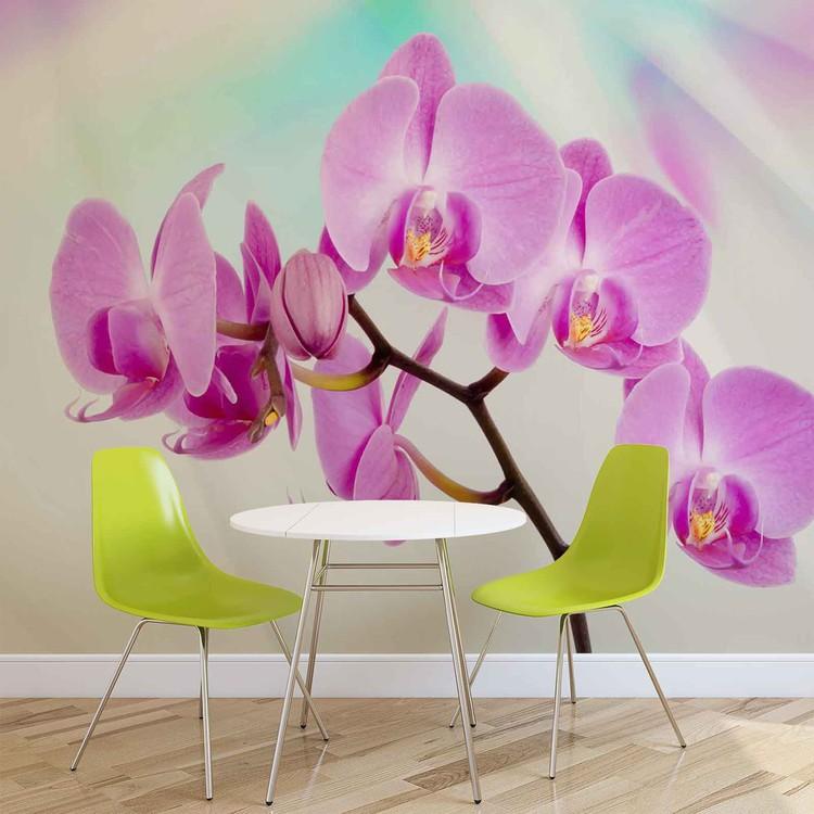Fleurs Orchidées Poster Mural