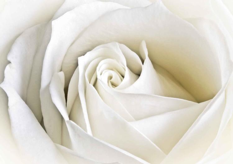 Fleurs Rose Blanc Nature Poster Mural