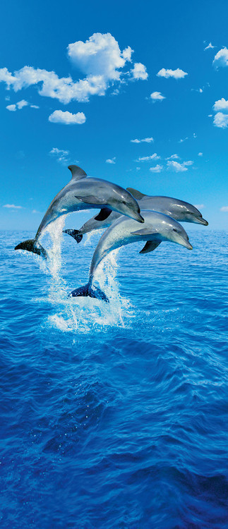 THREE DOLPHINS - steve bloom Poster Mural
