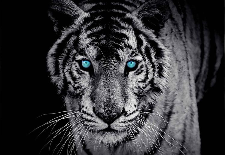 Tiger Animal Poster Mural