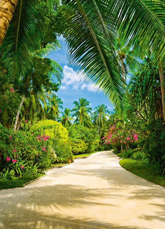TROPICAL PATHWAY Poster mural