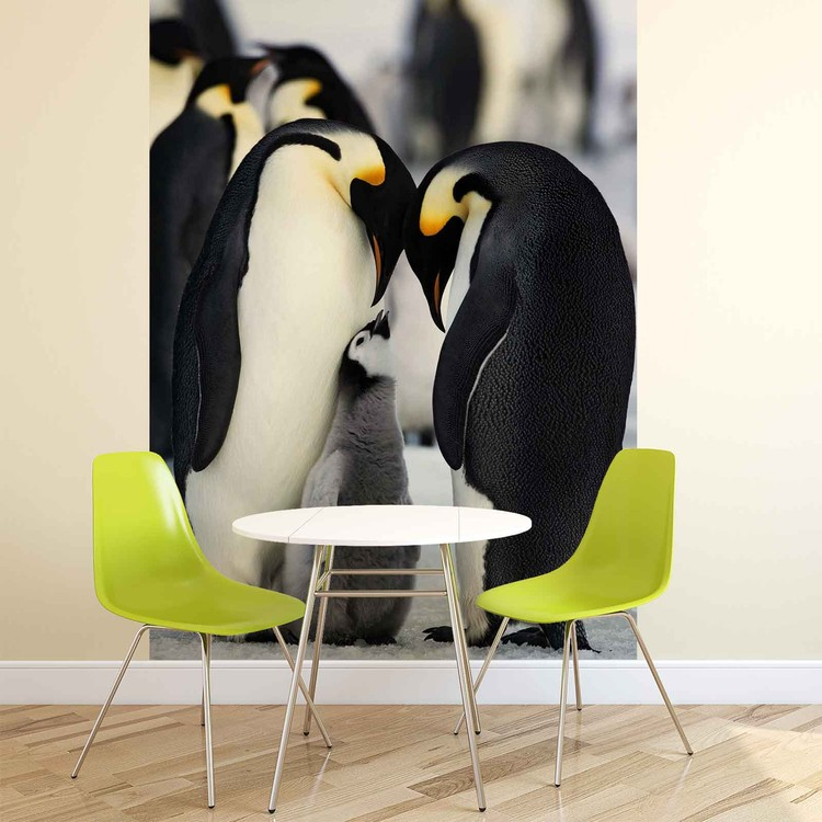 Animals Penguin Wallpaper Mural