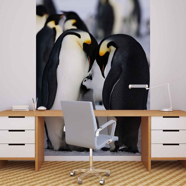 Animals Penguin Wallpaper Mural