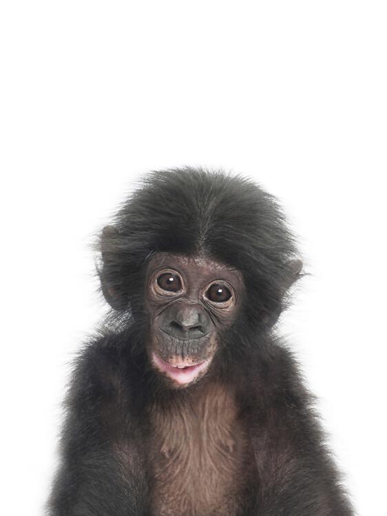 Wallpaper Mural Baby Monkey