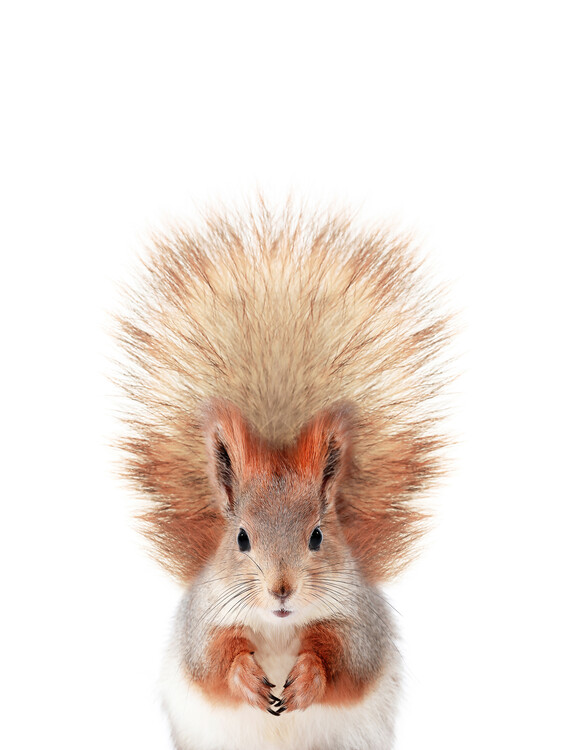 Wallpaper Mural Baby Squirrel