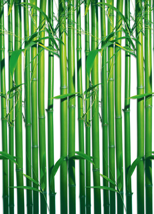 BAMBOO II Wallpaper Mural