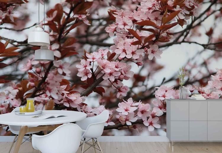 Beautiful Blossoms Wallpaper Mural