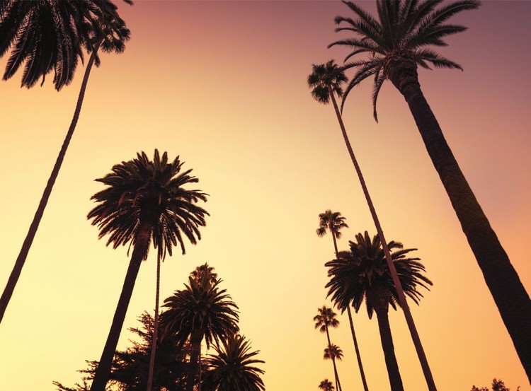 California - Palm Tree Wallpaper Mural
