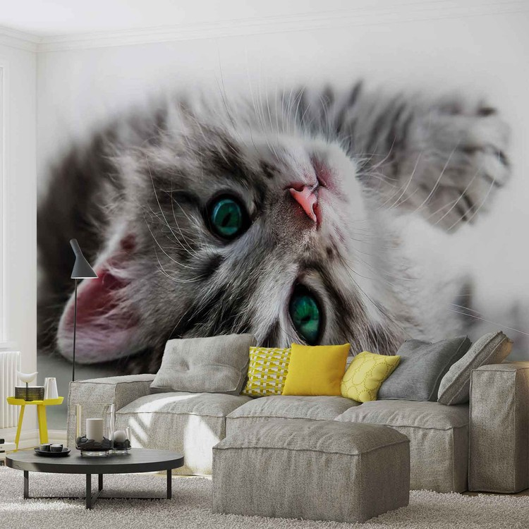 Cat Kitten Wallpaper Mural