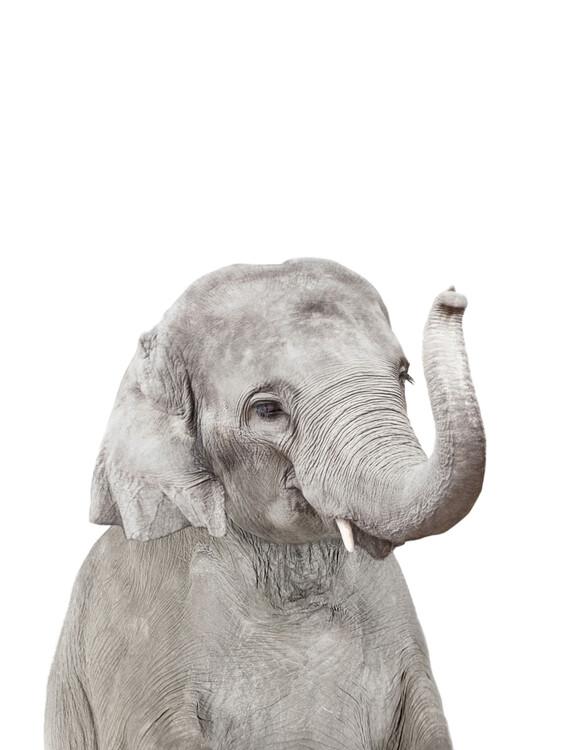 Wallpaper Mural Elephant 2