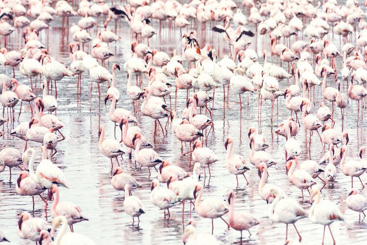 Wallpaper Mural Flock of flamingos