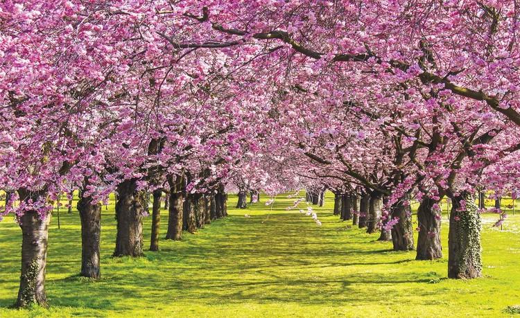 Flowering Trees Wallpaper Mural