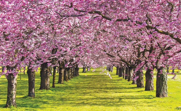 Flowering Trees Wallpaper Mural