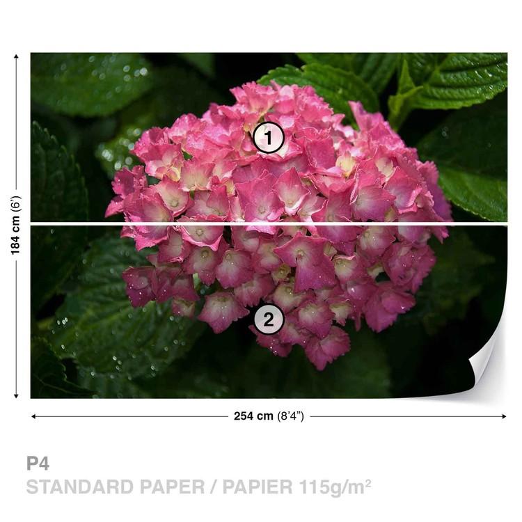Flowers Hydrangea Pink Wallpaper Mural