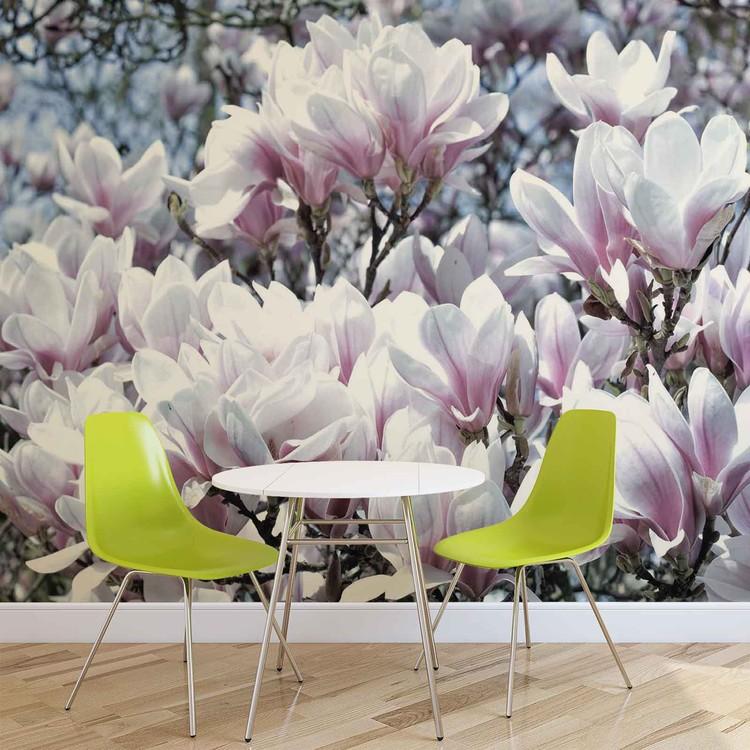 Flowers Magnolia Wallpaper Mural