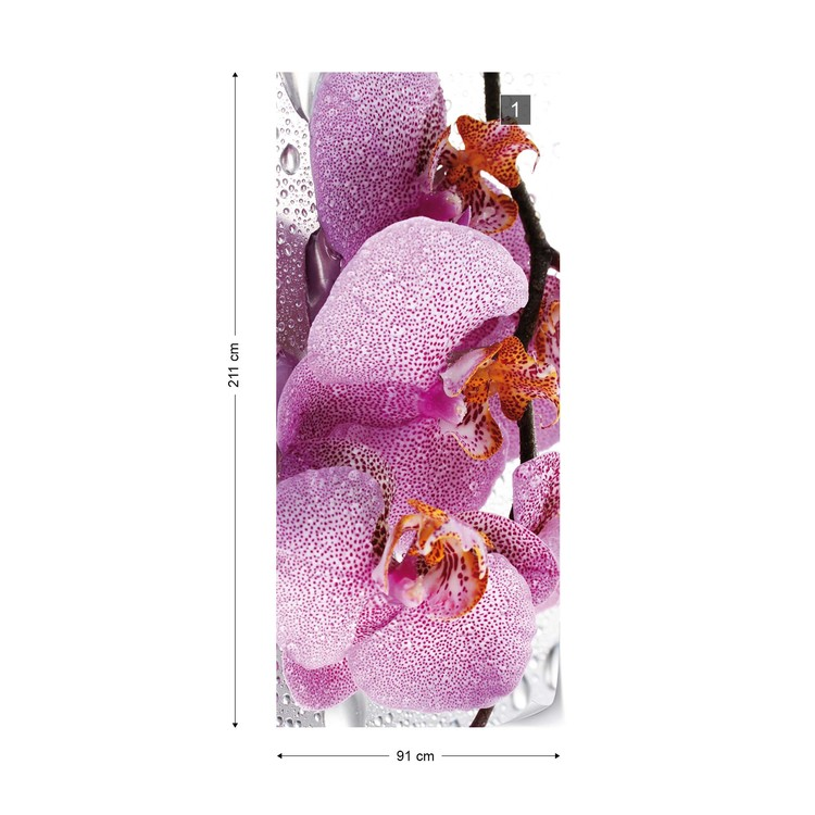 Flowers Orchids Drops Wallpaper Mural