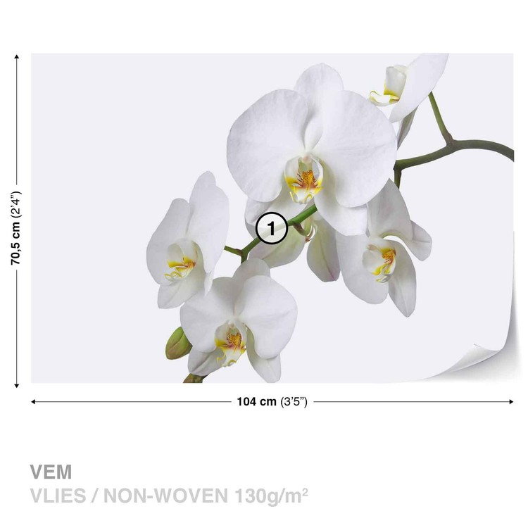 ... Flowers Orchids Nature White Wallpaper Mural