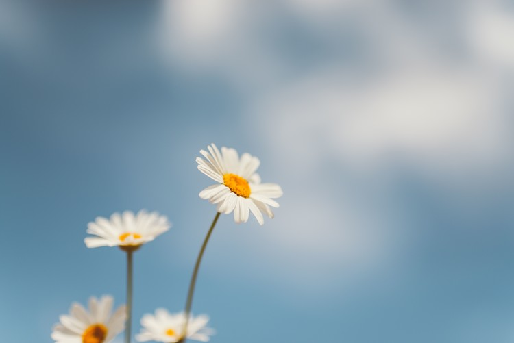 Wallpaper Mural Flowers with a background sky