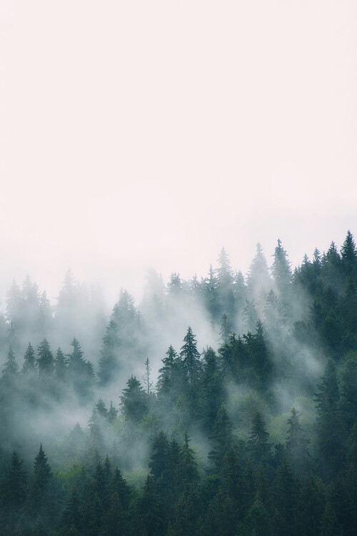 Wallpaper Mural Fog and forest