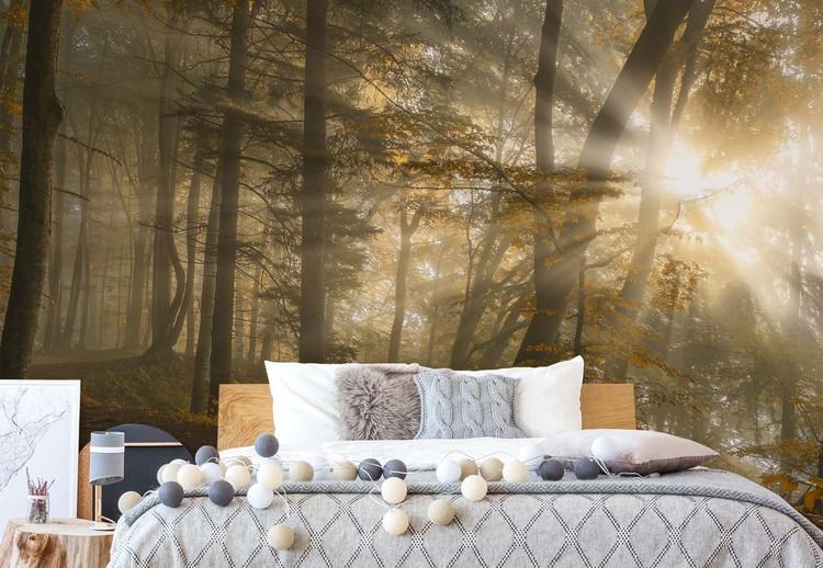 Forest Light Wallpaper Mural