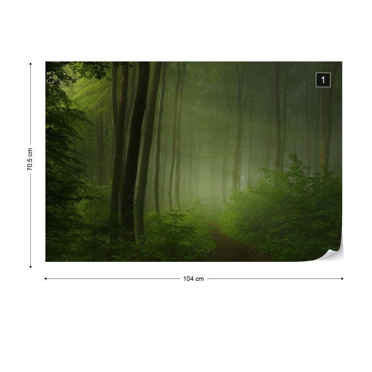 Forest Morning Wallpaper Mural