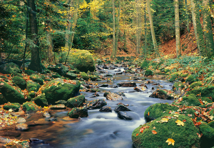 FOREST STREAM Wallpaper Mural