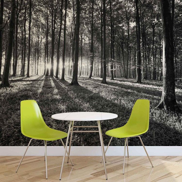 Forest Trees Beam Light Nature Wallpaper Mural