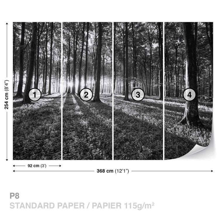 Forest Trees Beam Light Nature Wallpaper Mural